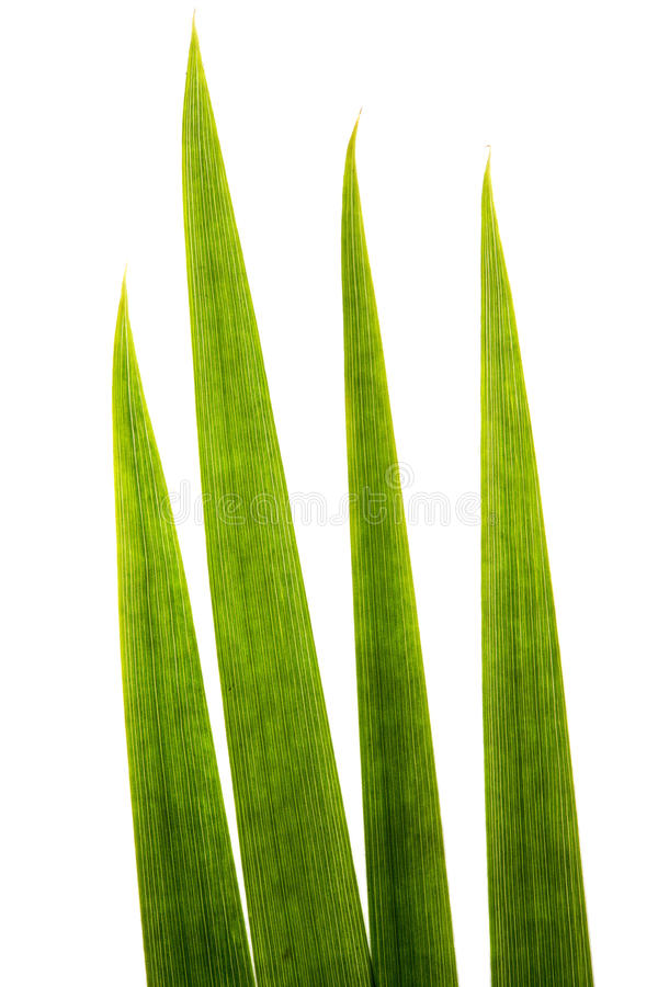 De super macro van grassprietjes stock fotografie