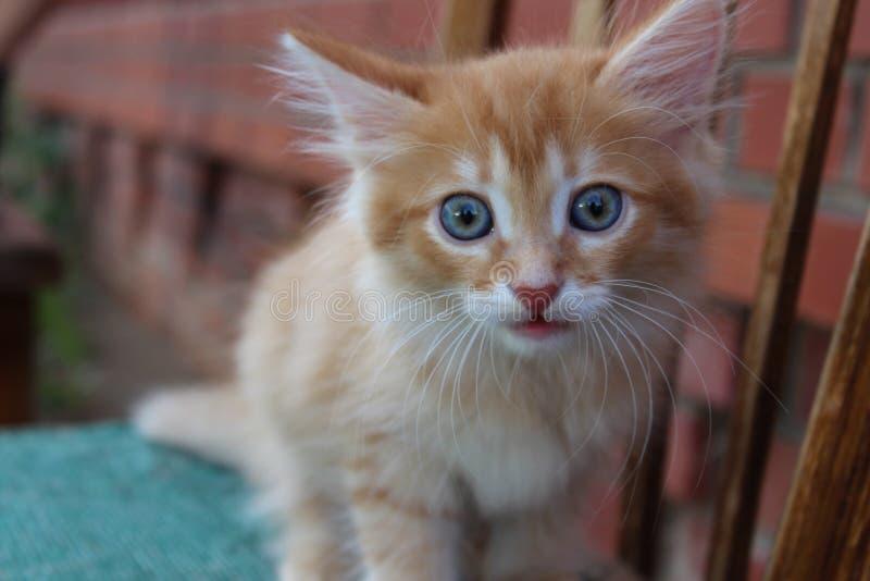 De sweety kat van de muziekgember royalty-vrije stock afbeeldingen