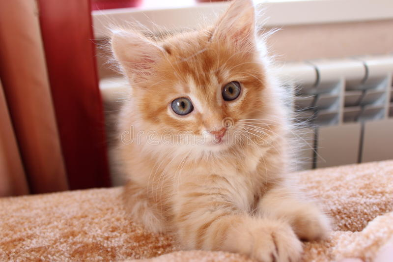 De sweety kat van de muziekgember stock fotografie