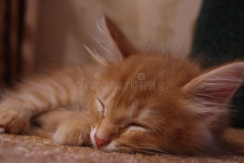 De sweety kat van de muziekgember royalty-vrije stock foto's