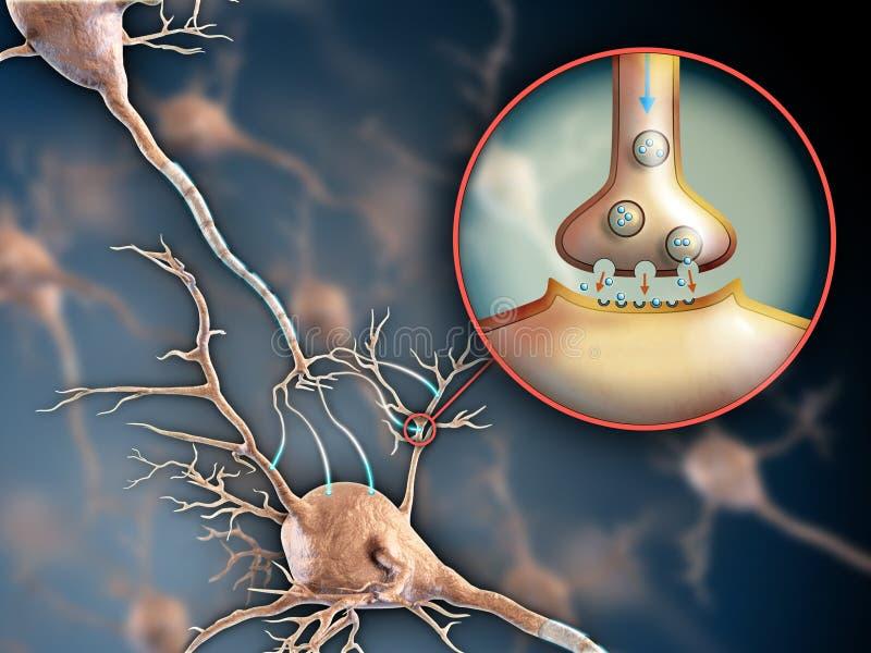 De synaps van het neuron stock illustratie