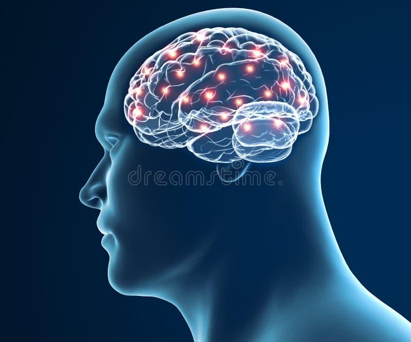 De synapsfuncties van hersenenneuronen stock illustratie
