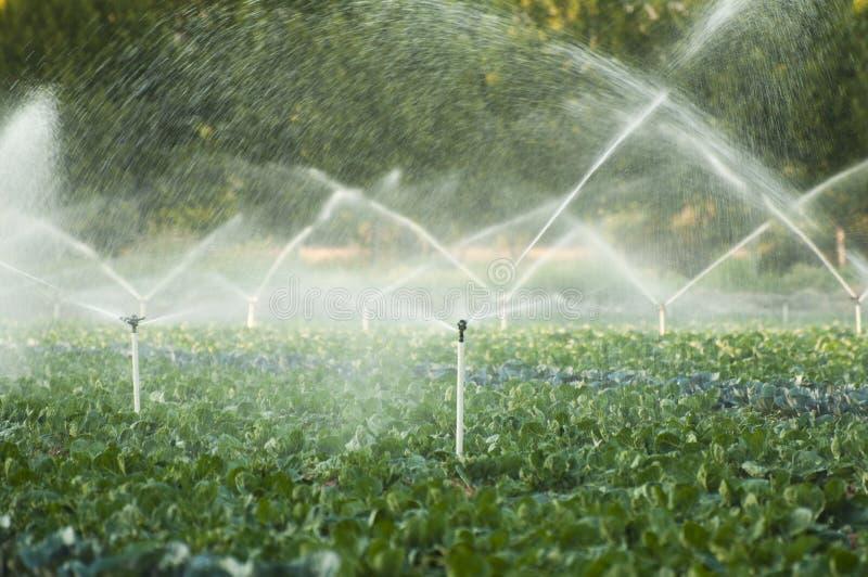 De systemen van de irrigatie stock afbeeldingen
