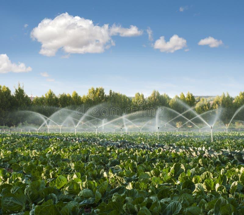 De systemen van de irrigatie in een moestuin royalty-vrije stock afbeeldingen