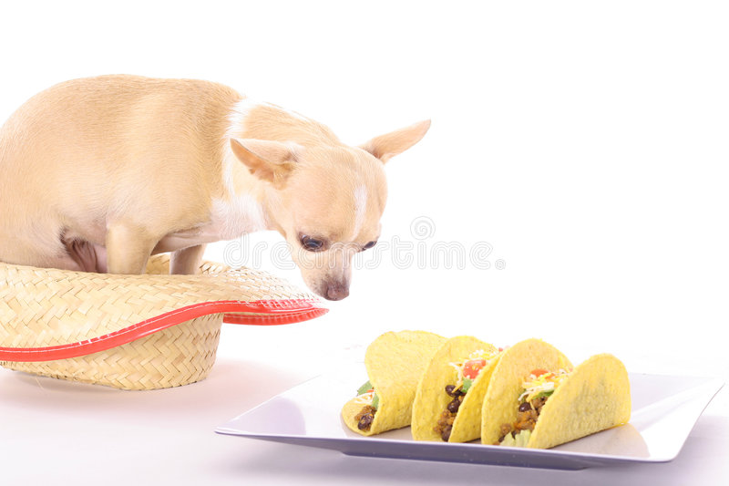 De taco's van Chihuahua stock afbeelding