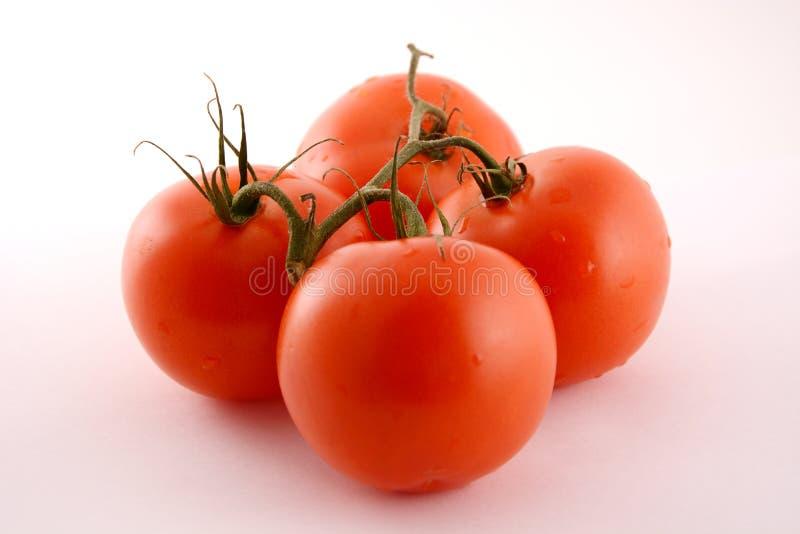 De tak met vier tomaten stock afbeeldingen