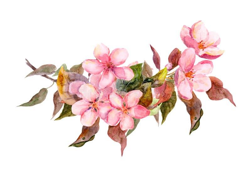 De tak van de bloesem met roze bloemen watercolor vector illustratie