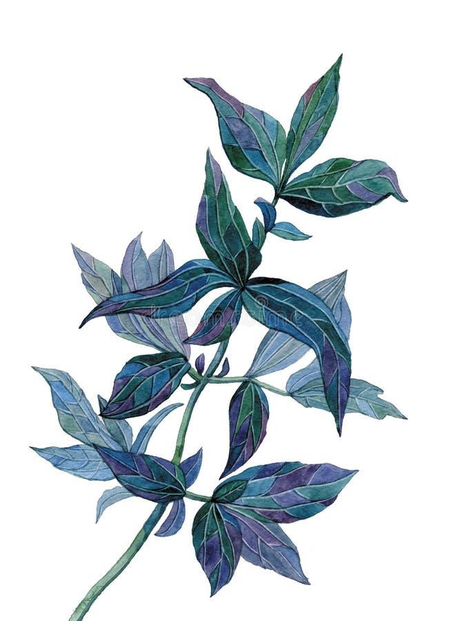 De tak van de jasmijn vector illustratie