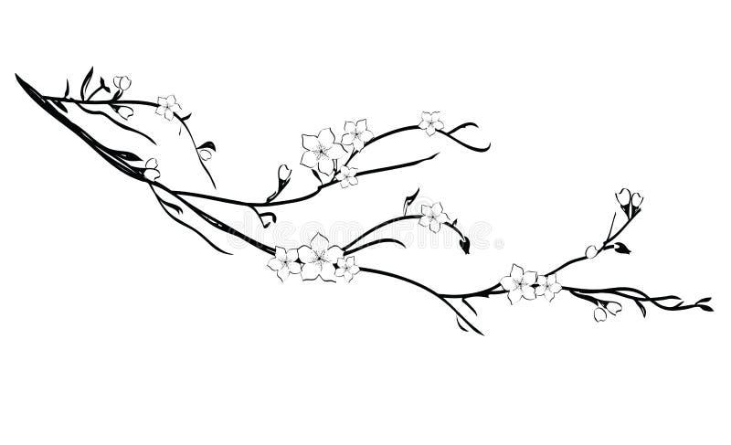 De tak van de kersenboom in bloesem royalty-vrije illustratie