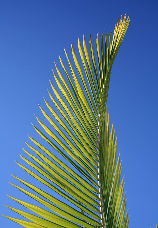 De Tak van de palm stock afbeeldingen