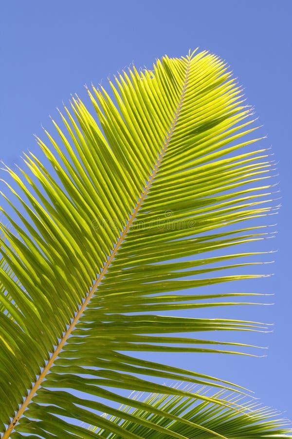 De tak van de palm royalty-vrije stock fotografie