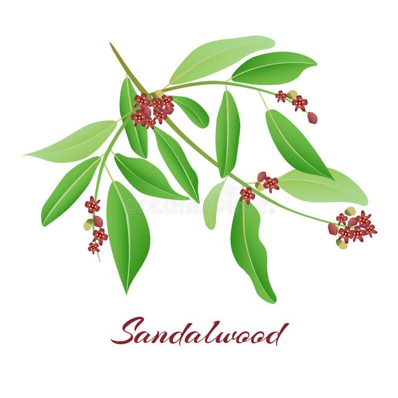 De tak van de sandelhoutboom vector illustratie