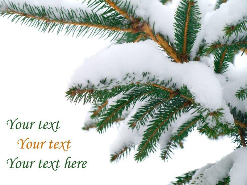 De tak van de spar die met sneeuw wordt behandeld royalty-vrije stock fotografie