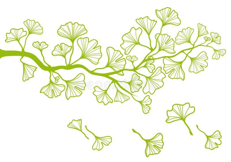 De tak van Ginkgo met bladeren, vector stock illustratie