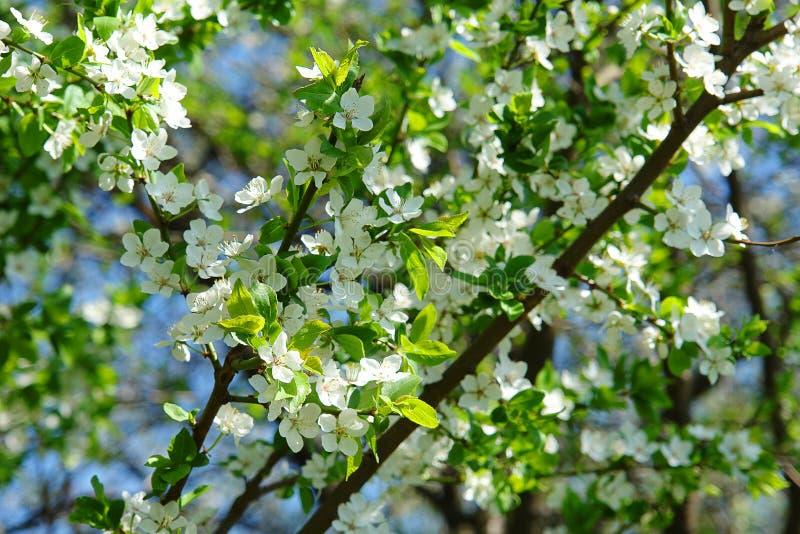 De tak van de lentebloemen van jonge boom stock foto's