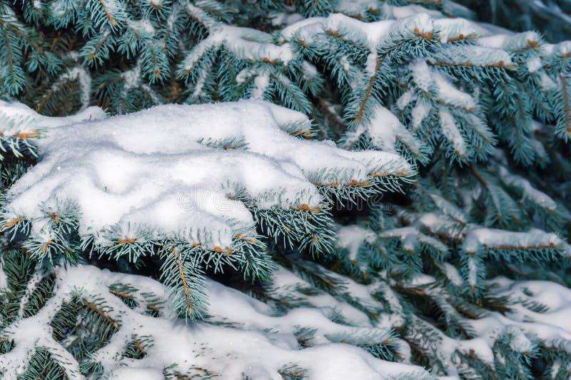 De tak van de spar die met sneeuw wordt behandeld Sneeuw de winterachtergrond met Kerstboom in openlucht royalty-vrije stock foto's