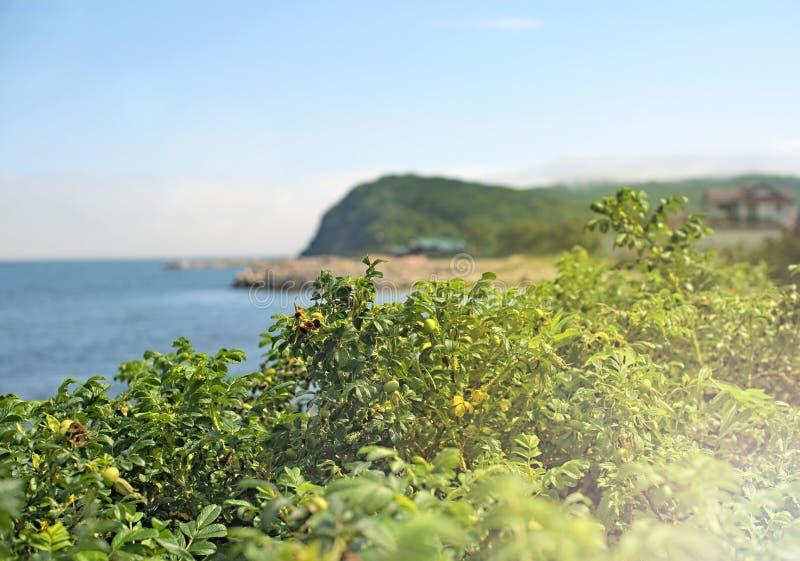 De tak van wildernis nam in het zonlicht op het strand toe royalty-vrije stock afbeeldingen