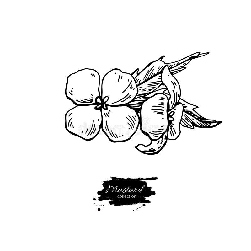 De tak vectortekening van de mosterdinstallatie Botanische bloemillustrati royalty-vrije illustratie