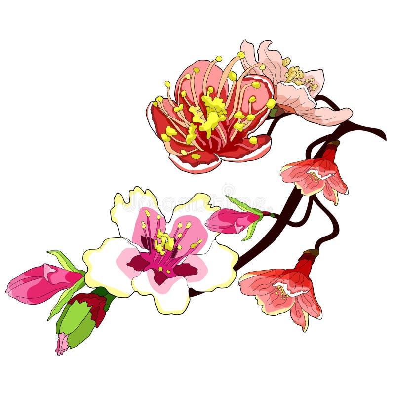 De takbloem van de amandel komt een noot vectorillustratie tot bloei royalty-vrije illustratie