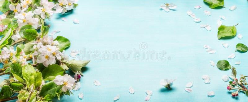 De takjes van de de lentebloesem op blauwe turkooise achtergrond, hoogste mening, banner de lente stock fotografie