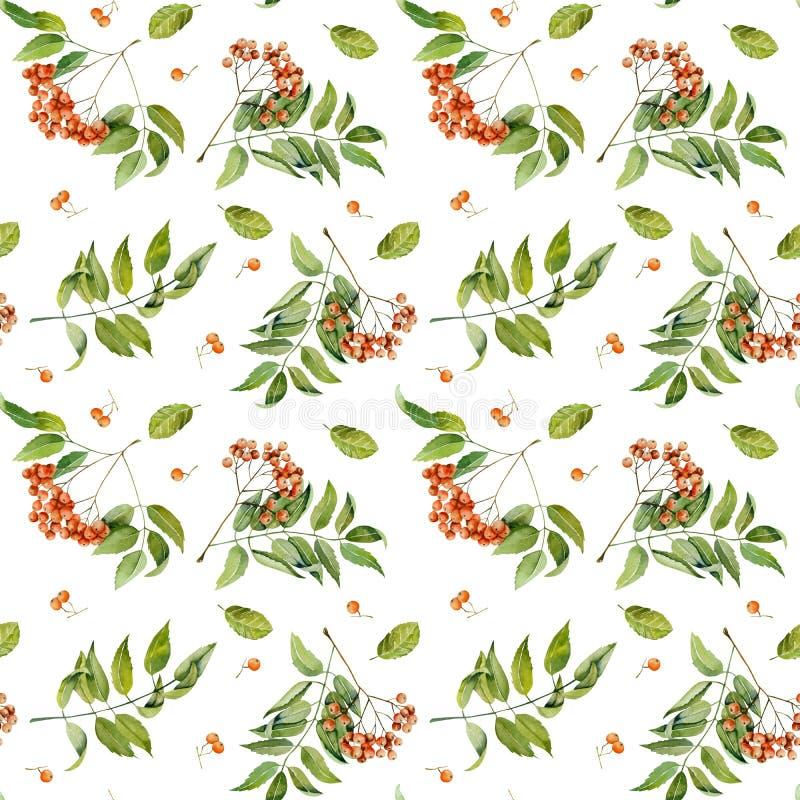 De takken, de bessen en de bladeren naadloos patroon van de waterverflijsterbes stock illustratie