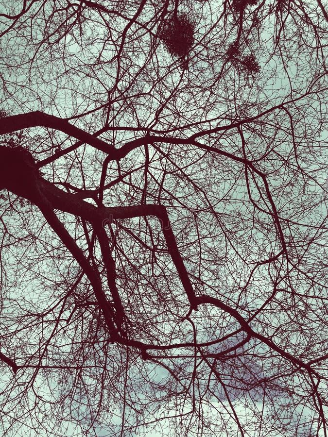 De takken die van de spinnewebhemel over de mening hangen stock foto