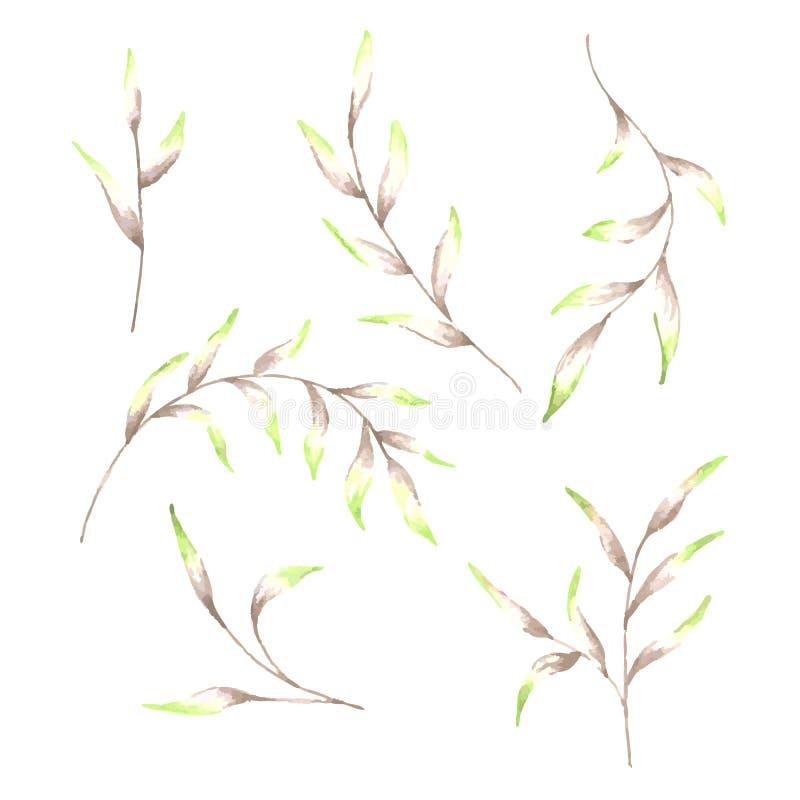 De takken en de takjes van de verscheidenheidswaterverf Reeks geïsoleerde bloemenelementen stock illustratie