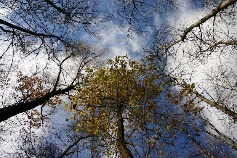 De takken van de bomen stock fotografie