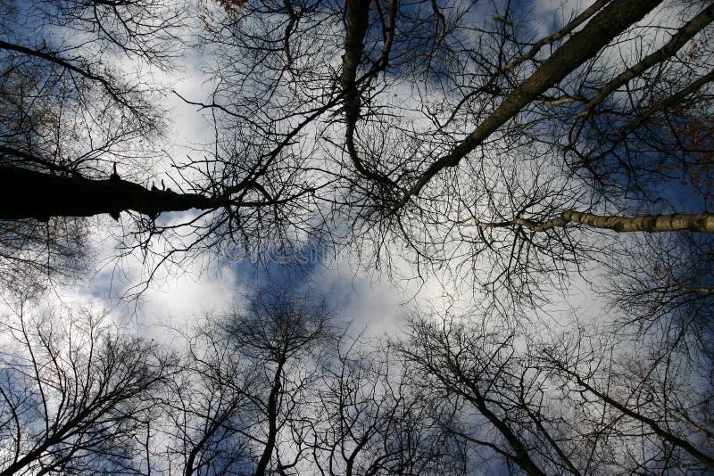 De takken van de bomen stock afbeelding