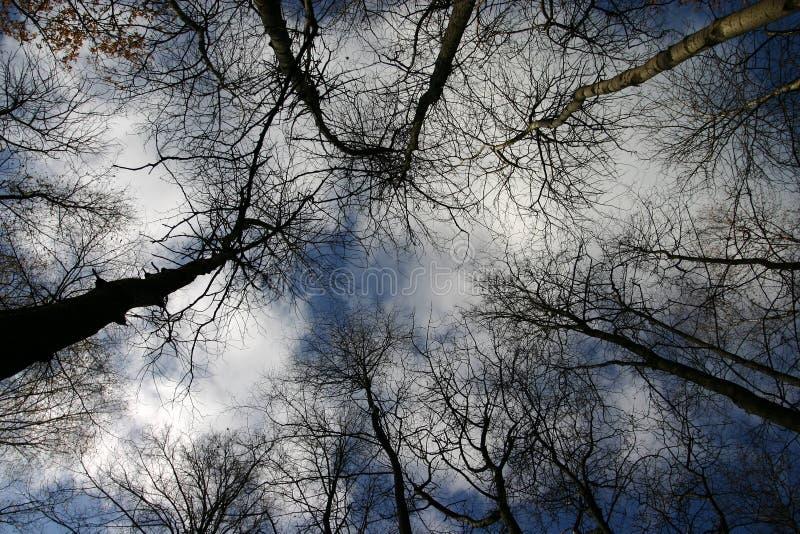 De takken van de bomen royalty-vrije stock foto's