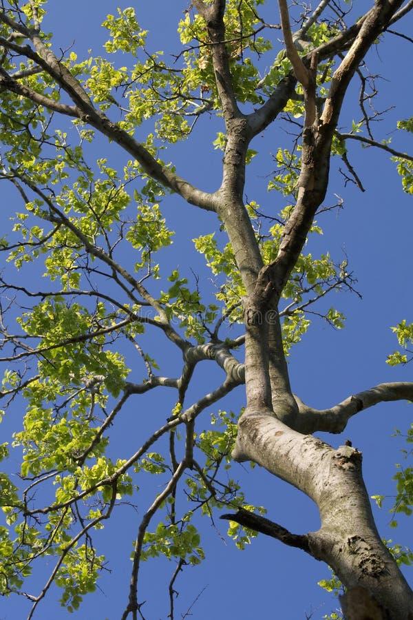 De takken van de boom stock foto afbeelding 5960520 - Deksel van de boom ...