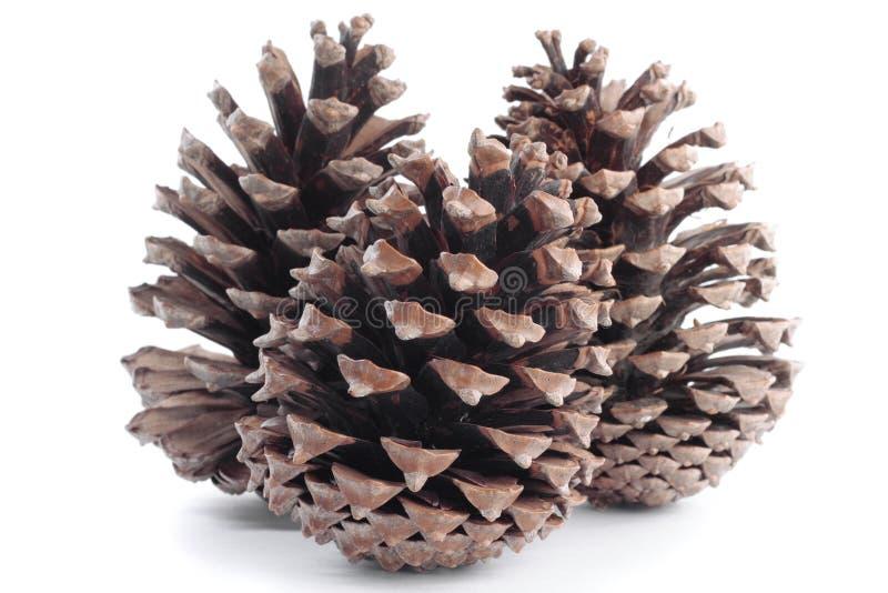 De takken van de boom met pinecones in de herfst royalty-vrije stock fotografie
