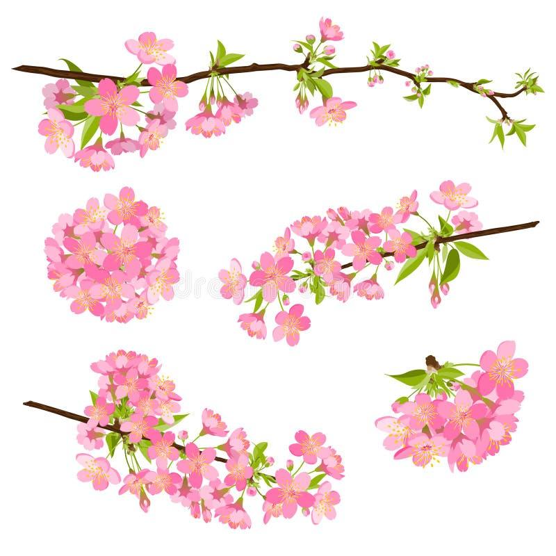 De takken van de kersenbloesem royalty-vrije illustratie