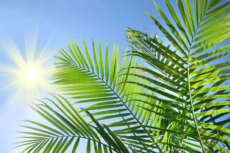 De takken van de palm in de zon royalty-vrije stock foto