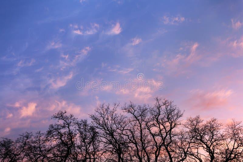 De takken van de silhouettenboom met hemel Zonsondergang Achtergrond voor desig royalty-vrije stock fotografie