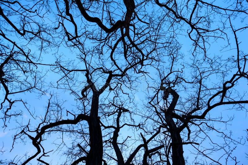 De takken van de silhouettenboom met hemel Zonsondergang Achtergrond voor desig royalty-vrije stock afbeeldingen