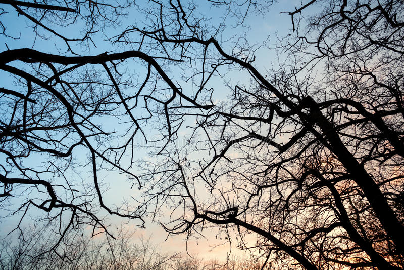 De takken van de silhouettenboom met hemel Zonsondergang Achtergrond voor desig stock foto
