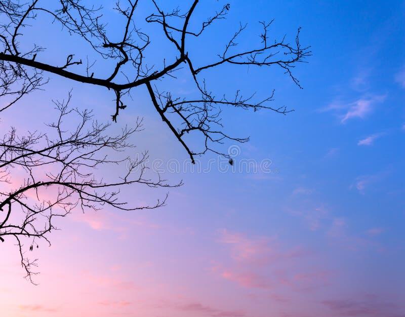De takken van de silhouettenboom met hemel Zonsondergang Achtergrond voor desig stock afbeelding