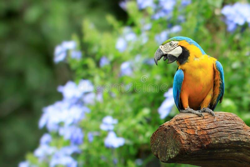 De takken van het Eiland van de papegaai in het hout royalty-vrije stock foto's