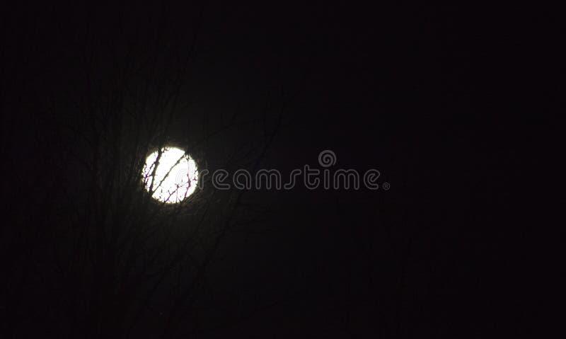 De takken van de volle maantrog van boom bij nacht, royalty-vrije stock afbeelding