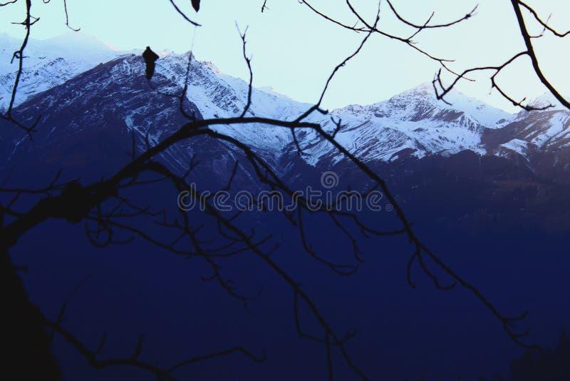 De takken van de waaierbomen van sneeuwbergen royalty-vrije stock foto's