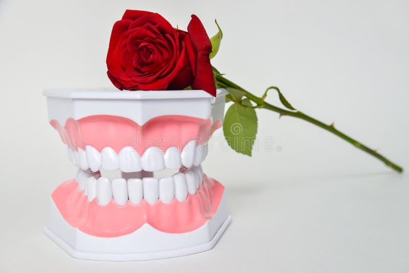 De tandkaak en nam bloem, de vieringsbeeld van de tandartsdag toe stock foto