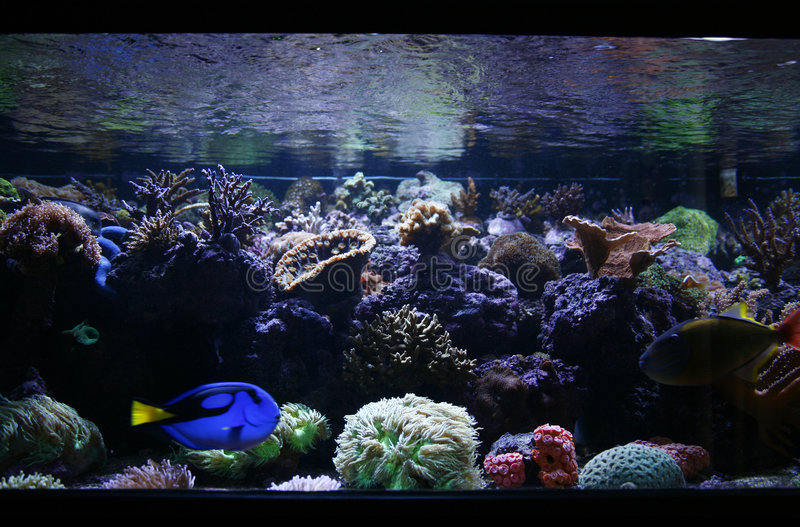De Tank van vissen royalty-vrije stock foto