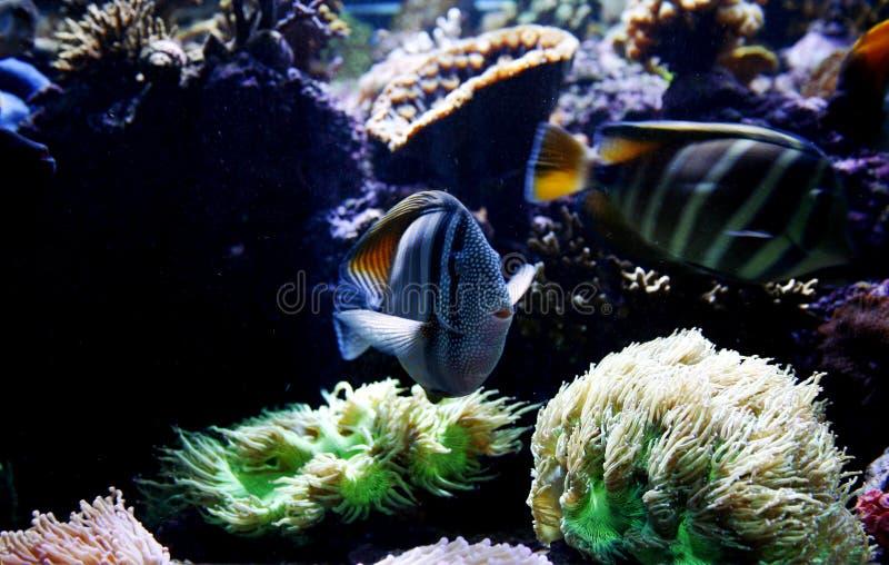De Tank van vissen stock foto