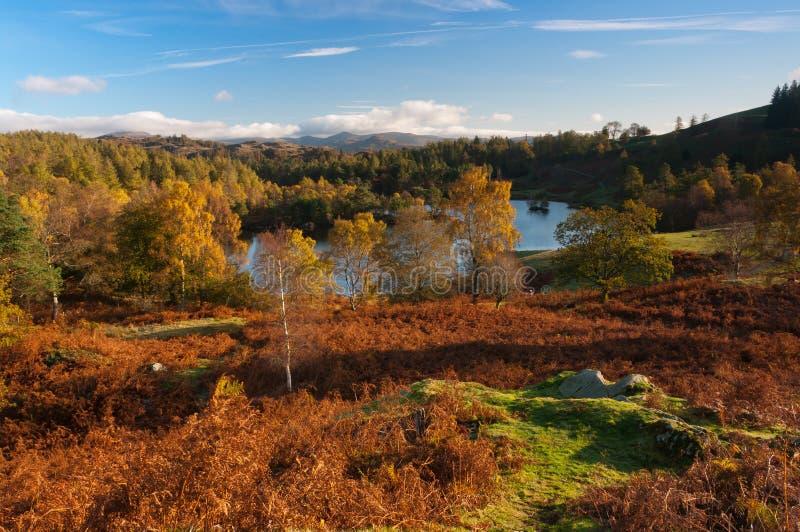 De Tarn Hows in de Herfst stock fotografie