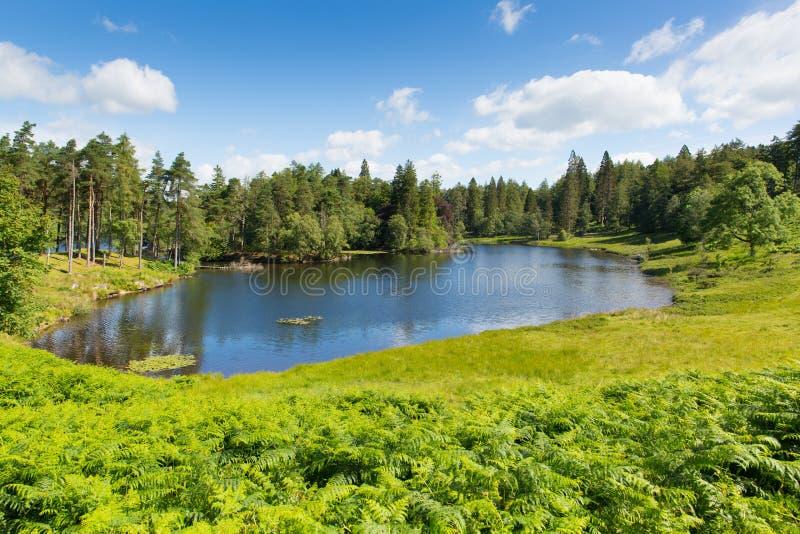 De Tarn Hows dichtbij Hawkshead-het Nationale Park Engeland het UK van het Meerdistrict op een mooie zonnige de zomerdag stock afbeelding