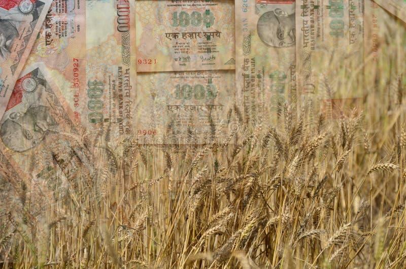 De tarwe en het Indische Geld of de munt in dubbel blootstellingsschot, een concept voor inkomens of besteden in Landbouw royalty-vrije stock afbeeldingen