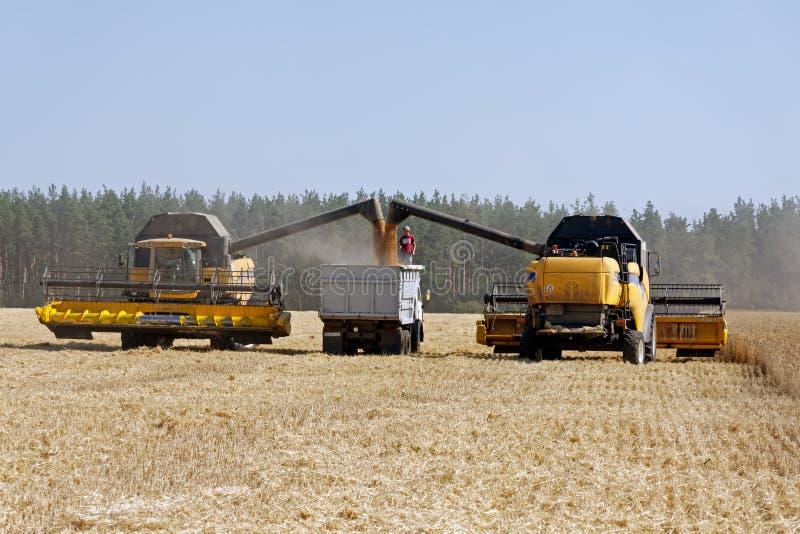 De tarwe van de maaidorserlading in de vrachtwagen royalty-vrije stock foto
