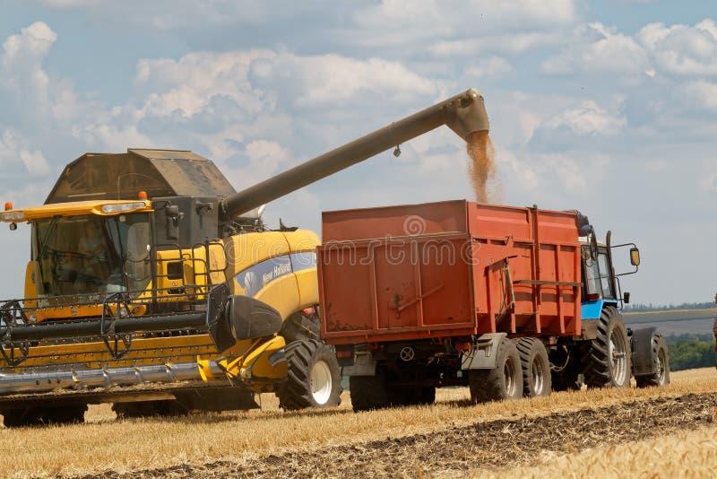 De tarwe van de maaidorserlading in de vrachtwagen royalty-vrije stock fotografie