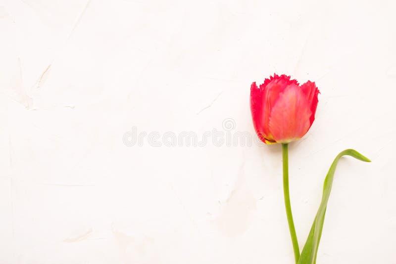 De tedere minimalistic lente bloeit samenstelling op textuuroppervlakte Mooie vrouwelijke installatiedecoratie voor de kaart van  stock foto